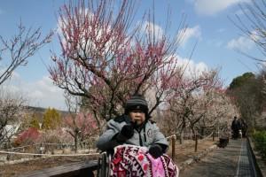 たくさんの梅が咲いてました(^^)v